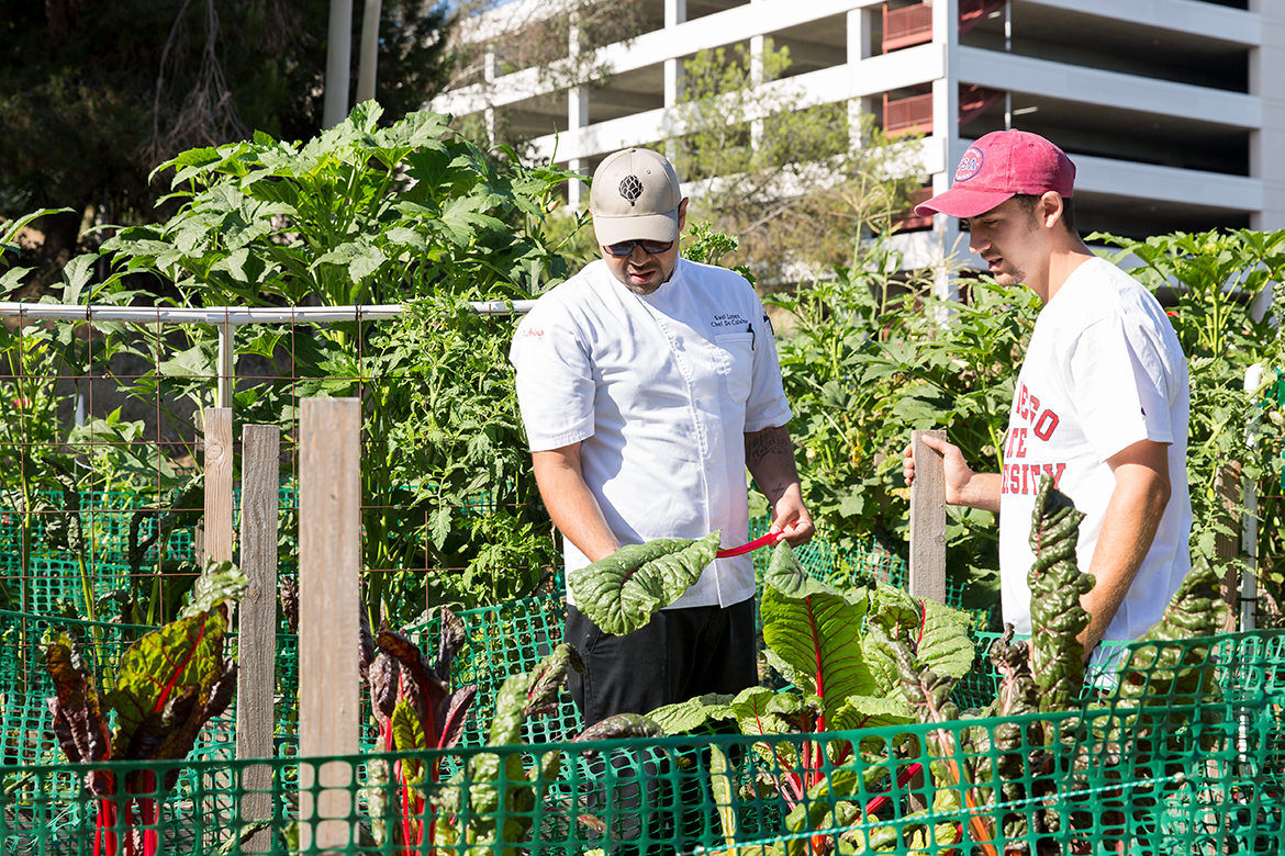 Photo of employees picking out vegetables from the garden.