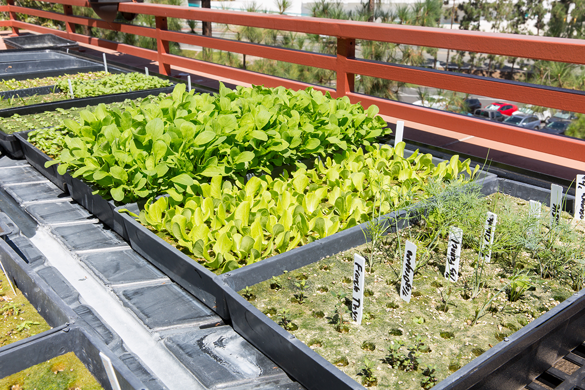 Photo of trays of growing vegetables.